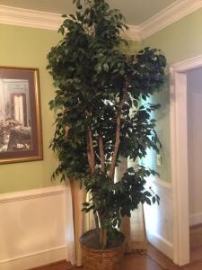 Large Artificial Ficus Tree